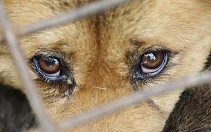 ответственность за жестокое обращение с животными